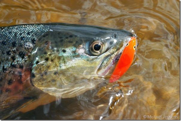 Rapala Original – Superagn til premierefiskeri i åen