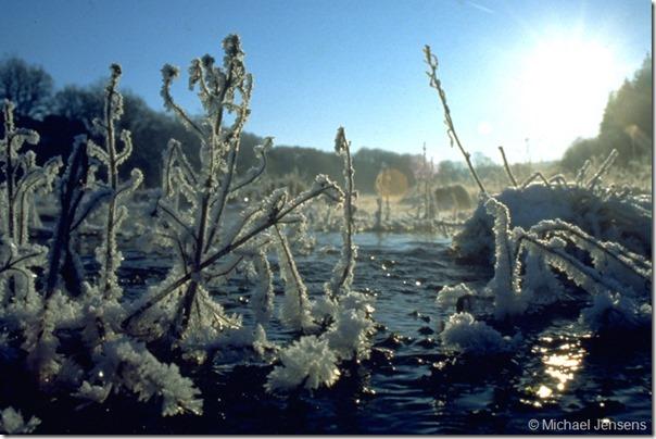 Vinter ved bækken