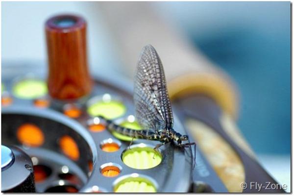Døgnfluen og det evige liv – smagsprøver fra bogen